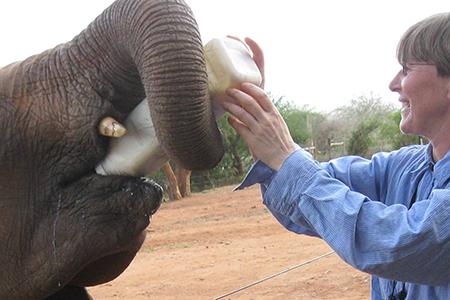 Lisa Kemmerer feeding an elephant in Kenya