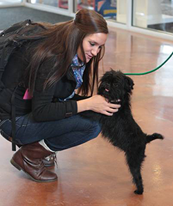 an MSUB student pets a therapy dog during Finals Week